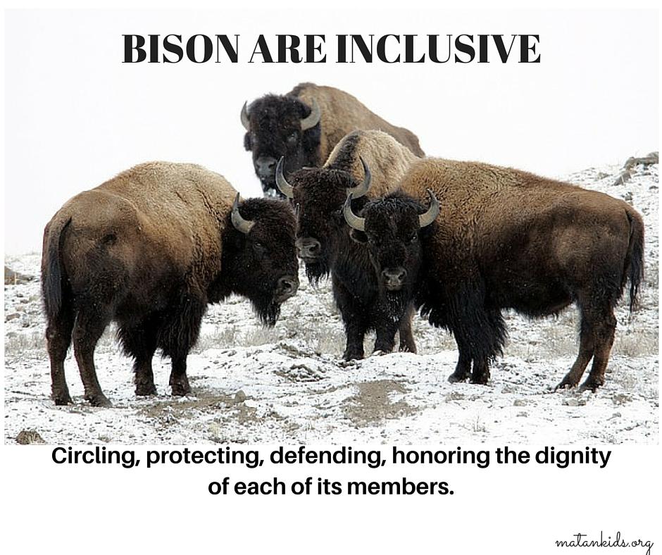 Bison are Inclusive; Matan